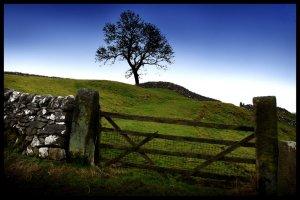 sheep gate