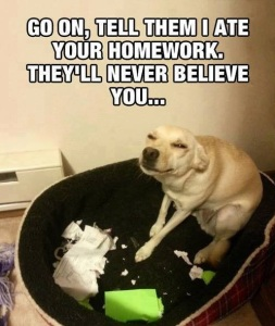 Funny-Dog-Go-On-Tell-Them-I-Ate-Your-Homework-They-Will-Never-Believe-You
