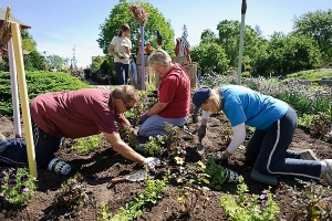A group of staff and volunteers plant a spiral-patterned display of annual flowers at the Allen Centennial Gardens at the University of Wisconsin-Madison during spring on June 3, 2013. (Photo by Jeff Miller/UW-Madison)