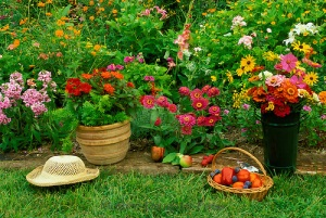Summer garden harvest -- full blooms, ripe fruit and vegetables, midwest USA
